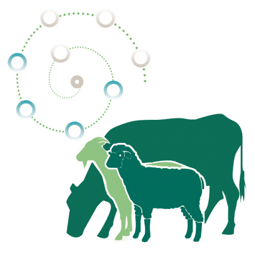 MinPro500 for the critical growth stages of ruminants