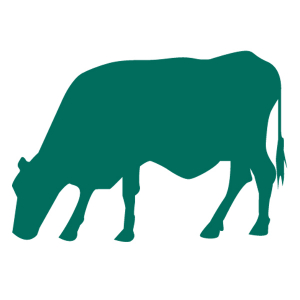 Organic cattle feeds