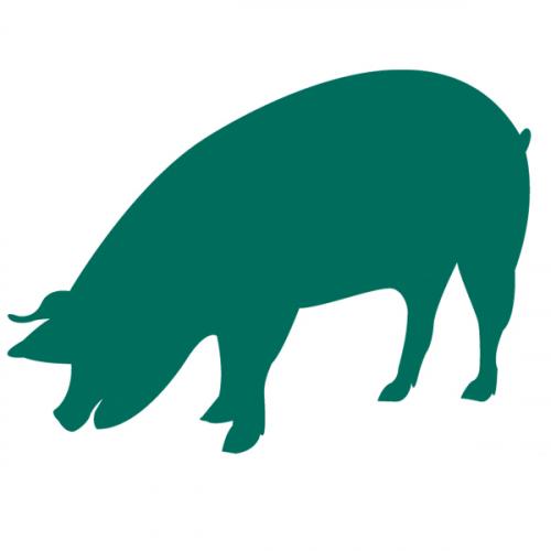 Organic pig feeds