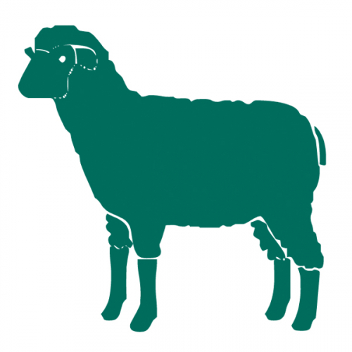 Organic sheep & lamb feeds